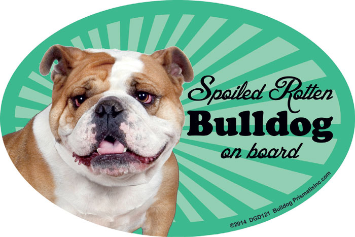 Bulldog Car Magnet - Spoiled Rotten