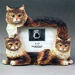 Maine Coon Cat Picture Frame