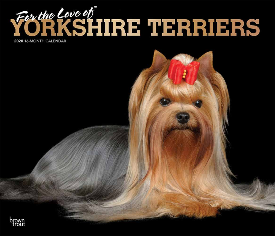 2020 Yorkshire Terriers Calendar, For the Love of Deluxe Foil
