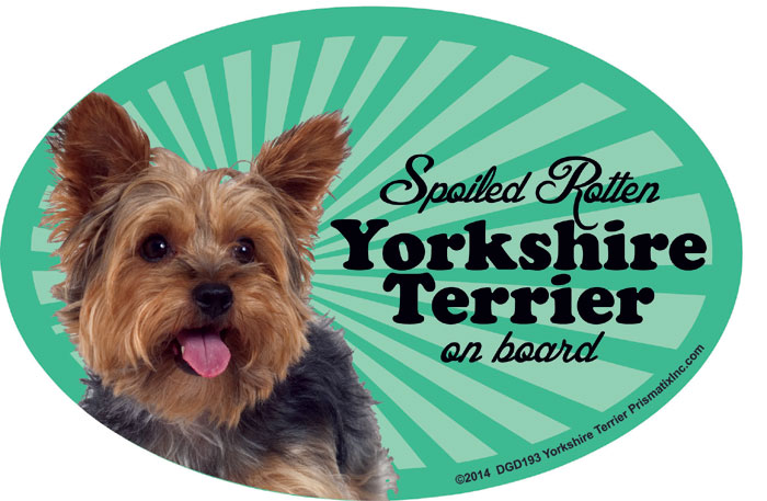 Yorkshire Terrier Car Magnet - Spoiled Rotten