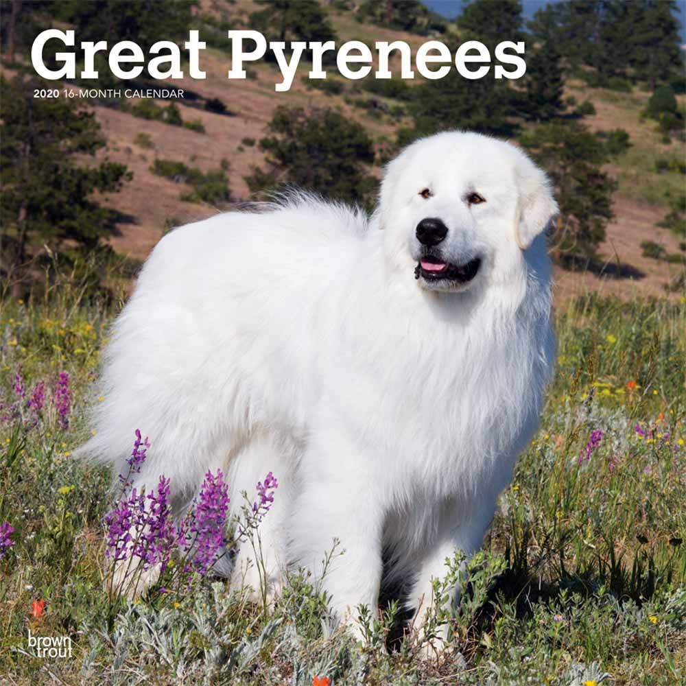 2020 Great Pyrenees Calendar