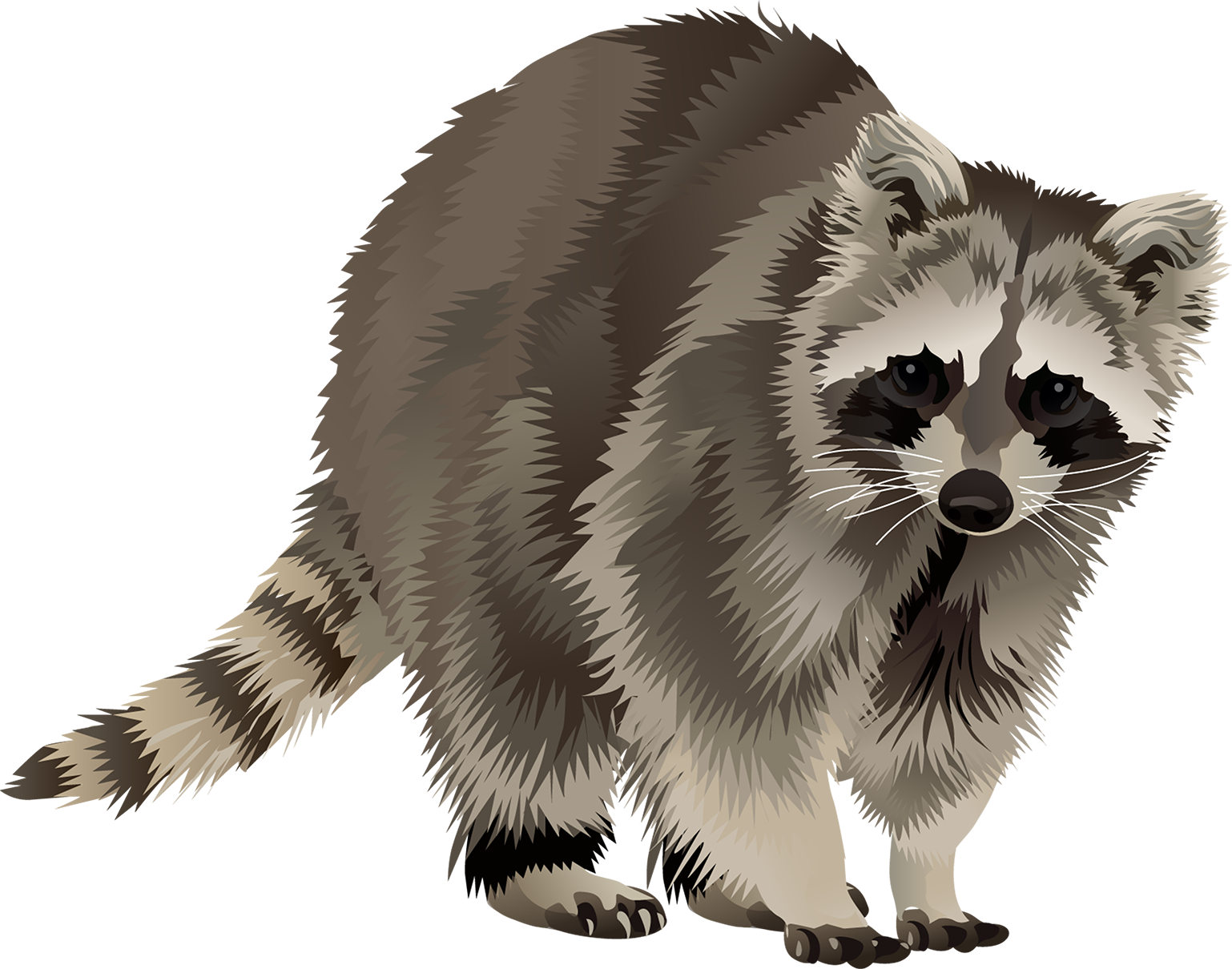Raccoon T-Shirt - Vibrant Vector
