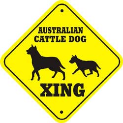 Australian Cattle Dog Crossing