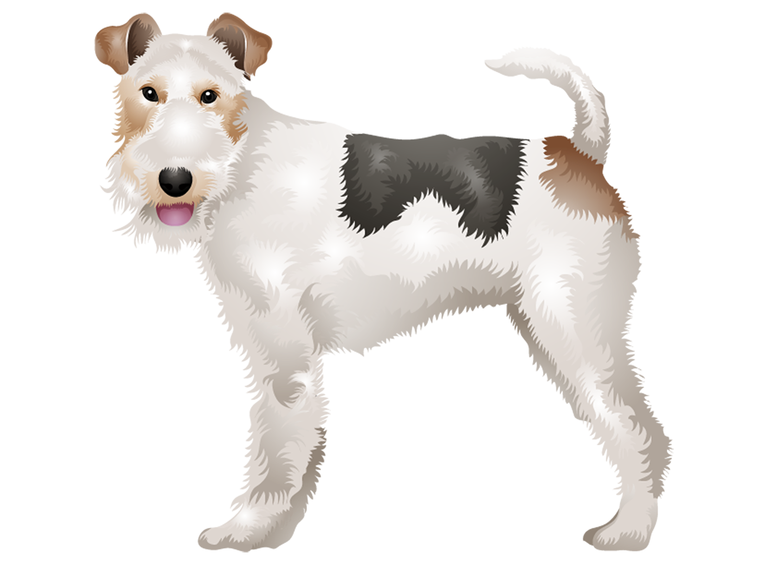 Wire Fox Terrier T-Shirt - Vibrant Vector