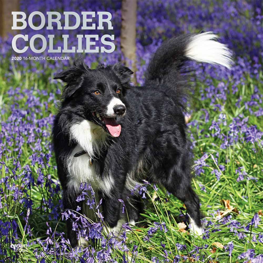 2020 Border Collies Calendar