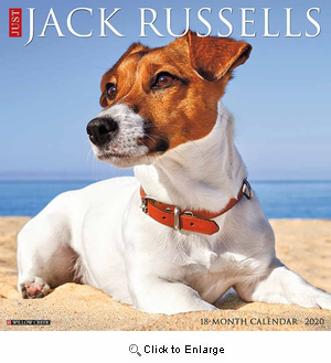 2020 Jack Russells Calendar Willow Creek
