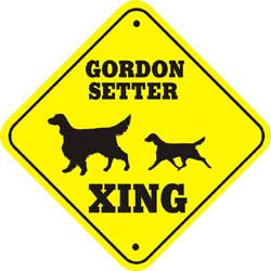 Gordon Setter Crossing