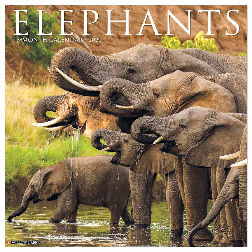 2020 Elephants Calendar Willow Creek