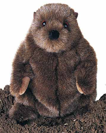 Groundhog Plush II