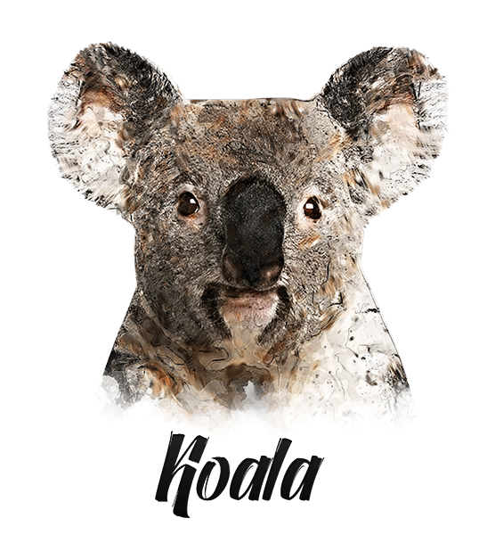 Koala T-Shirt - Vivid Colors