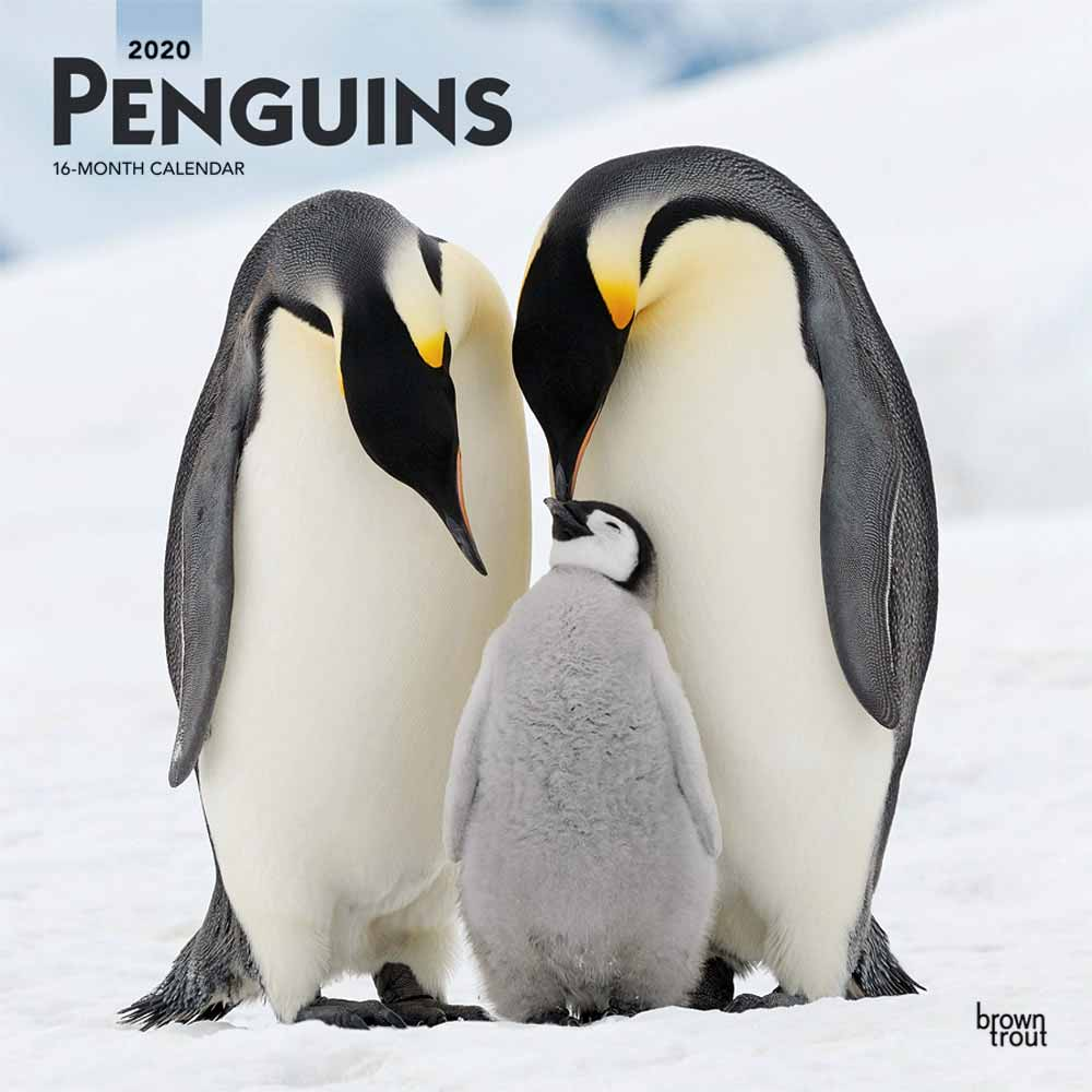 2020 Penguins Calendar