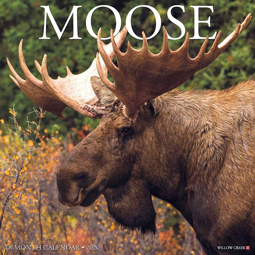 Moose Gifts, Jewelry & Moose Products