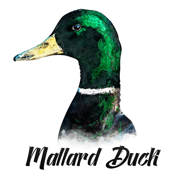 Duck T-Shirt - Vivid Colors