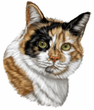 Calico Cat Decal Window Sticker