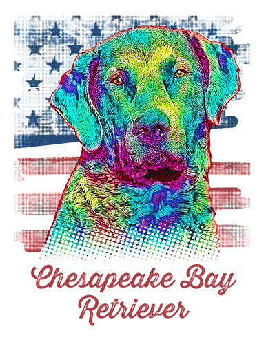 Chesapeake Bay Retriever T Shirt American Flag
