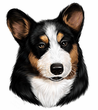 Corgi Decal Window Sticker Black & Tan