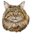 Maine Coon Cat Decal Window Sticker