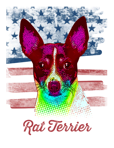 Rat Terrier T Shirt American Flag