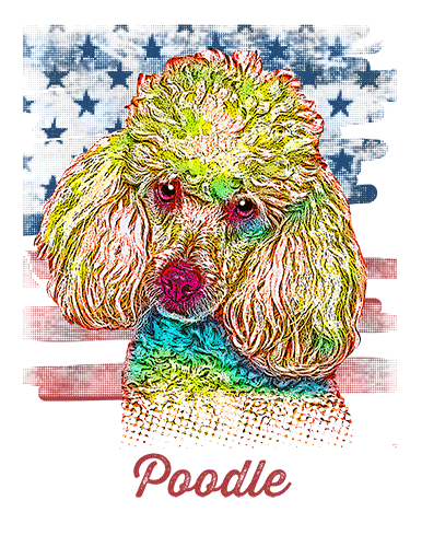 Poodle T Shirt American Flag