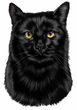 Black Cat Decal Window Sticker