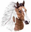 Paint Horse Decal Window Sticker