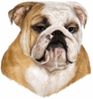Bulldog Decal Window Sticker