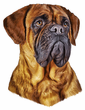Bullmastiff Decal Window Sticker