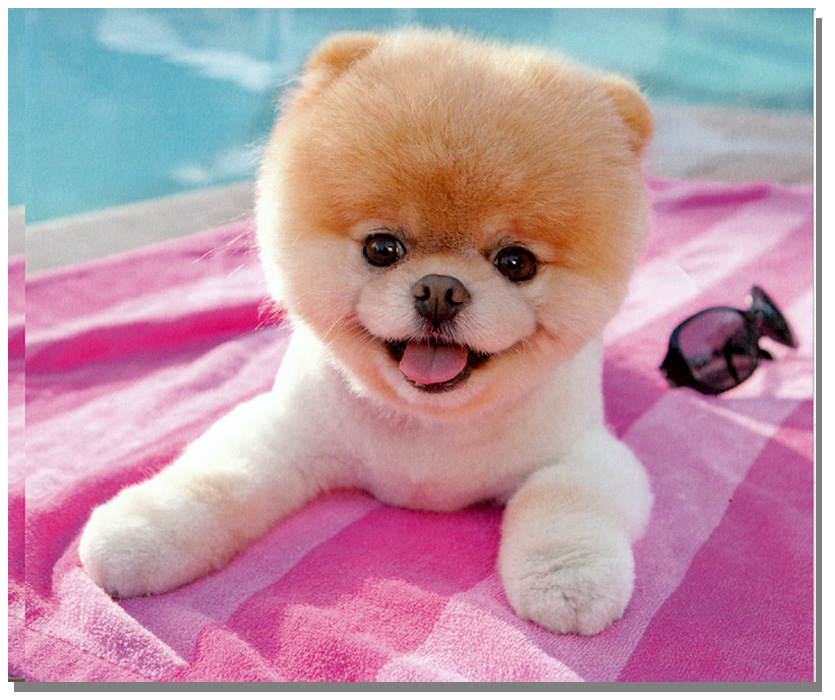 Wonderful Pomeranian Anime Adorable Dog - animebooks-com_2272_708036654  Pictures_68622  .jpg
