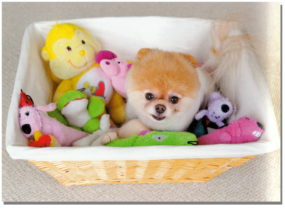 Beautiful Pomeranian Anime Adorable Dog - animebooks-com_2272_709014355  Image_48319  .jpg