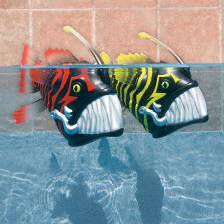 Battle Reef  Fish