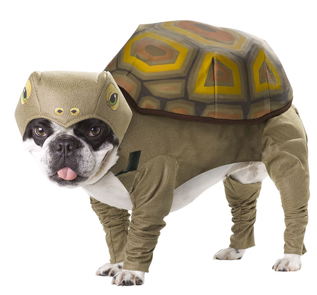 Dog Turtle Costume