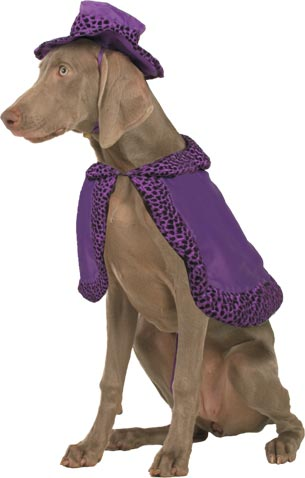 Pimp Suit Dog Costume