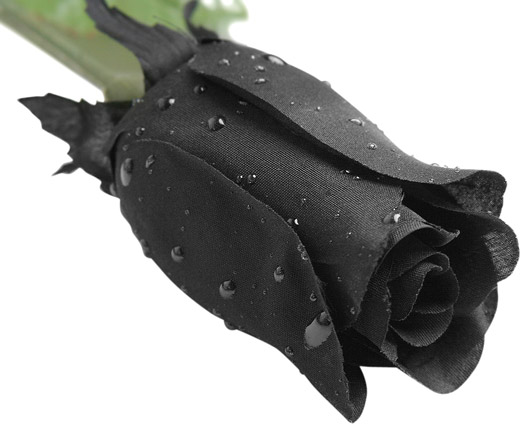 Dozen Fake Black Rose w/ Rain Drops