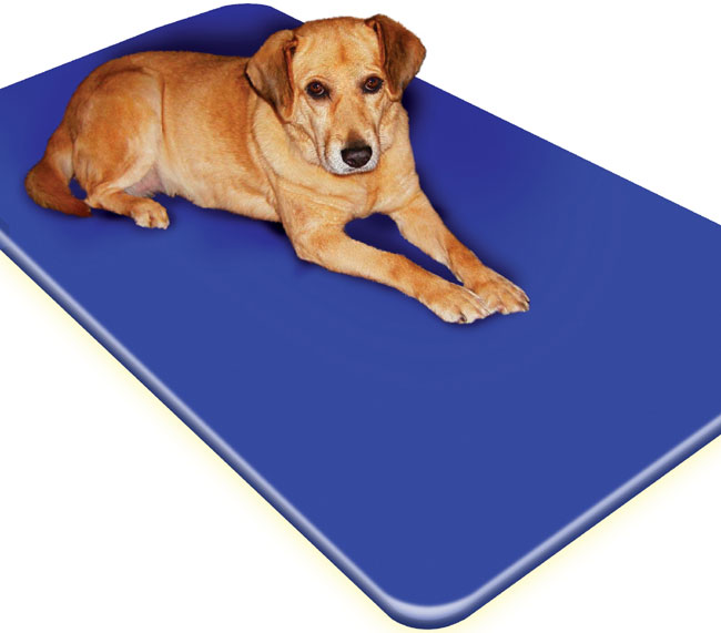 Large All Season Padded Cool Pet Bed