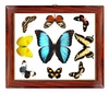 Butterfly Wall Art - Horizontal
