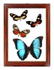 Butterfly Wall Art - Vertical