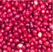 Cranberries, food scrapbook paper (McRice Photo Papers)