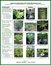 <b>Landscaper's Photographic Guide to Drought-Tolerant Cycads from the Jurassic Garden</b>