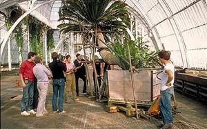 The world's oldest potted plant