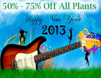 20 New Year Specials for 2013!