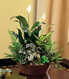 Flowers Delivery Allen Funeral Home, 508 Masters Ave  Wylie, TX 75098