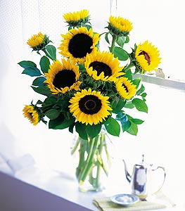 Shining Sunflowers