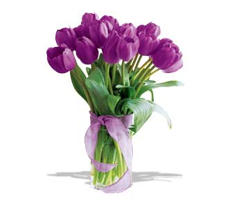 20 Passionate Purple Tulips