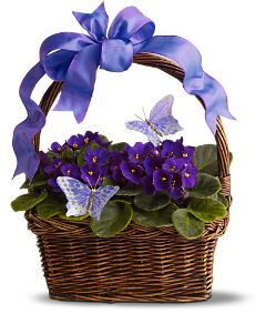 Violets Plant and Butterflies