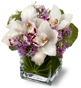 Lovely Orchids