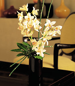 Artful Orchids - Designs East Florist Dallas