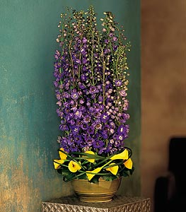 Delphinium Bunch - Designs East Florist Dallas