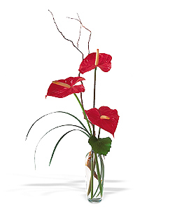 Anthuriums in a Vase - Designs East Florist Dallas