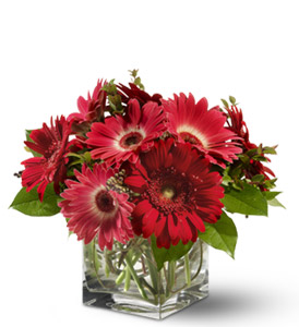 Gorgeous Gerberas - Designs East Florist Dallas