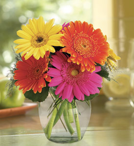 Gerbera Vase - Designs East Florist Dallas